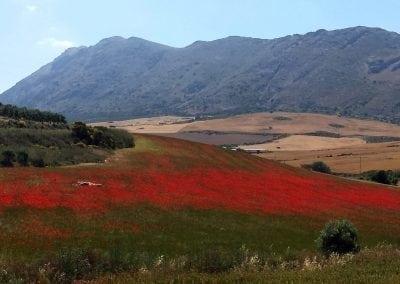 Andalucian Hillside