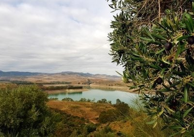 Olives and Lake View, Andalucia