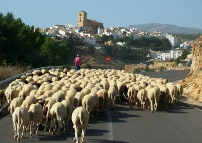 Cycling Country Bike Tours in Alhama