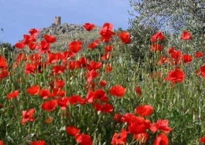 Spring Self Guided Bike Trip in Andalusia
