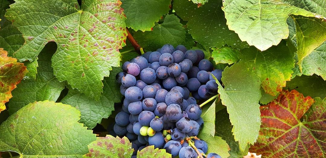 La Rioja & Basque Country      €2,265            Spain      7 DAYS