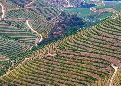 vineyards in the Douro region