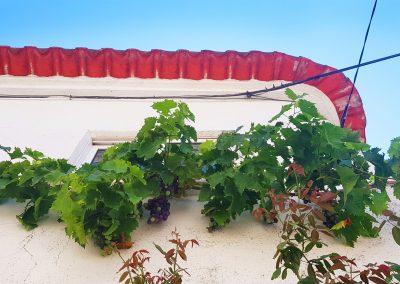 Portugal's Douro vines